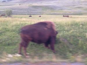 Buffalo Jam