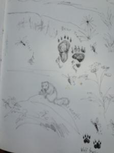 Yellow-bellied Marmmot on the rock.  Bear print